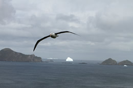 Albatrosses indicate the presence of marine life