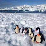 Knit and Natter penguins reach Antarctica